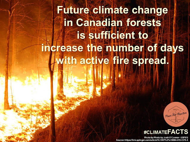 Climate Facts Forest Fires