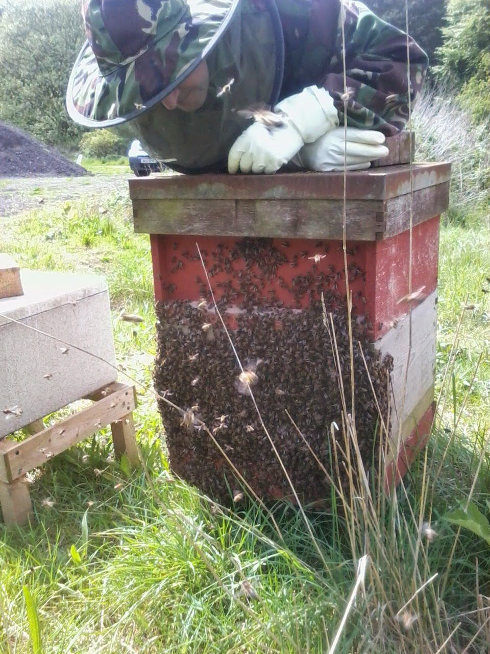 Beehive full to overflowing with bees.