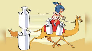 Amul launches camel milk in select Gujarat Markets