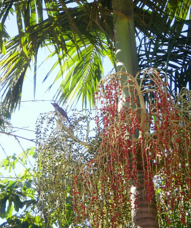 Bird in palm with red seeds