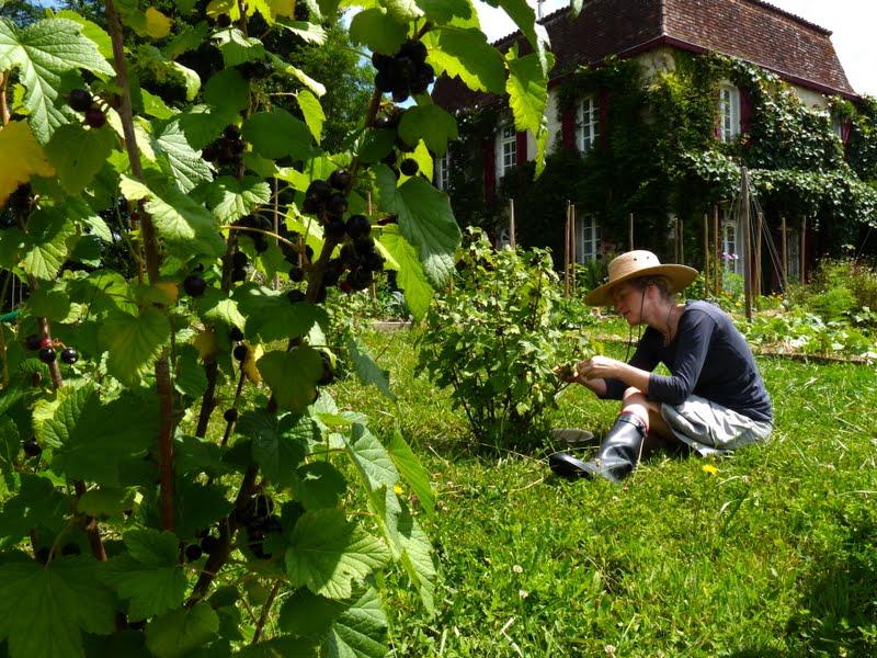 Mailhos - cuisine de jardin: June 2011