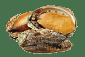 abalone : loài bào ngư (e-bơ-lố-ni)