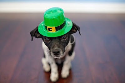 St Patrick's day dogs pictures 2018