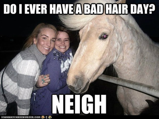 Bad Hair Day Horse? Neigh! - Funny animal hairstyles and hilarious Donald Trump hair memes at the #FridayFrivolity link-up this week!  Join the linky party for all things fun, funny, happy & hopeful!