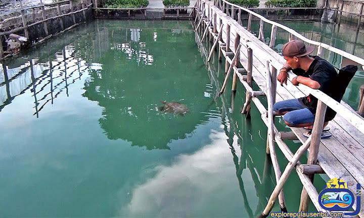 taman biota laut pulau harapan