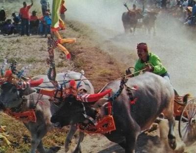 Makepung Buffalo Race, Tradisi Makepung Jembrana Bali