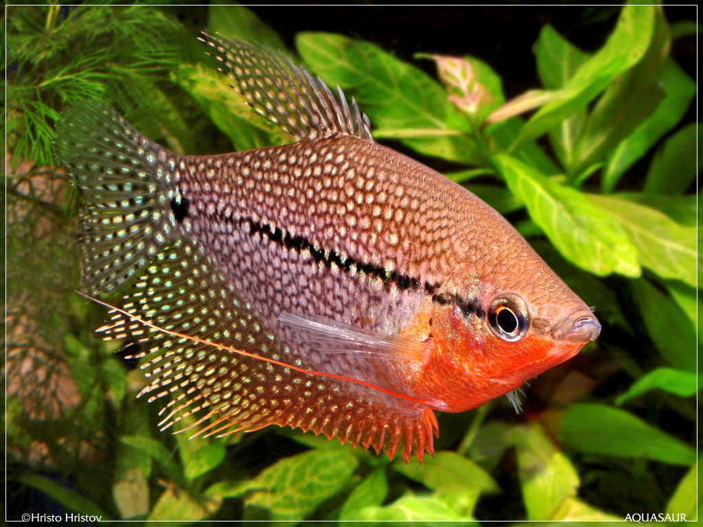 Picturespool Beautiful Fishes Wallpaper Pictures Sea