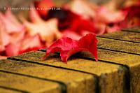 http://fineartfotografie.blogspot.de/2013/10/der-herbst-zeigt-sich-rot-autumn-shows.html