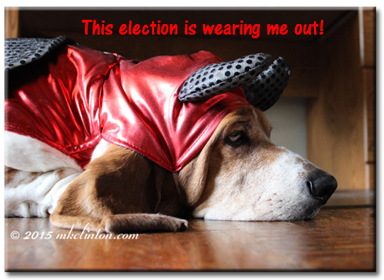"Bentley Basset Hound dressed as devil with meme ""This presidential election would tire out the the devil himself."""