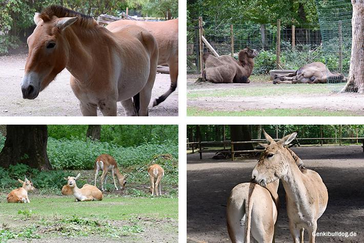 Tierpark Oberwald