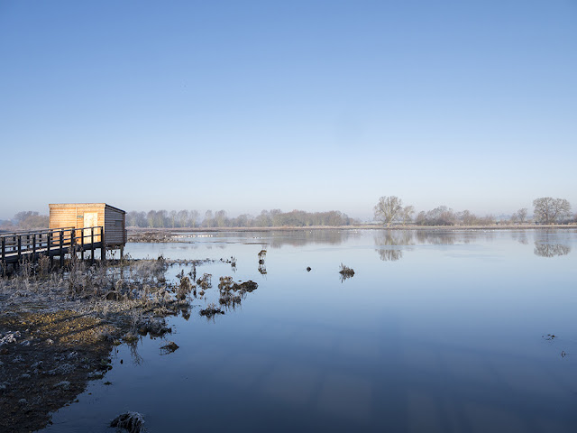 Brilliant Blues - The Viaduct Hide at the Floodplain Forest Nature Reserve