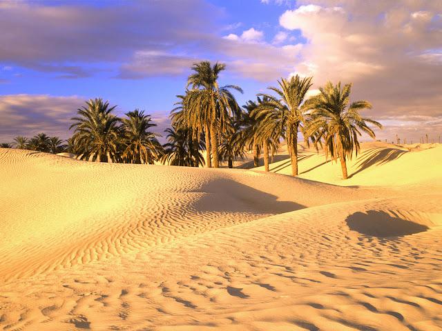 Palme Deserto Sahara