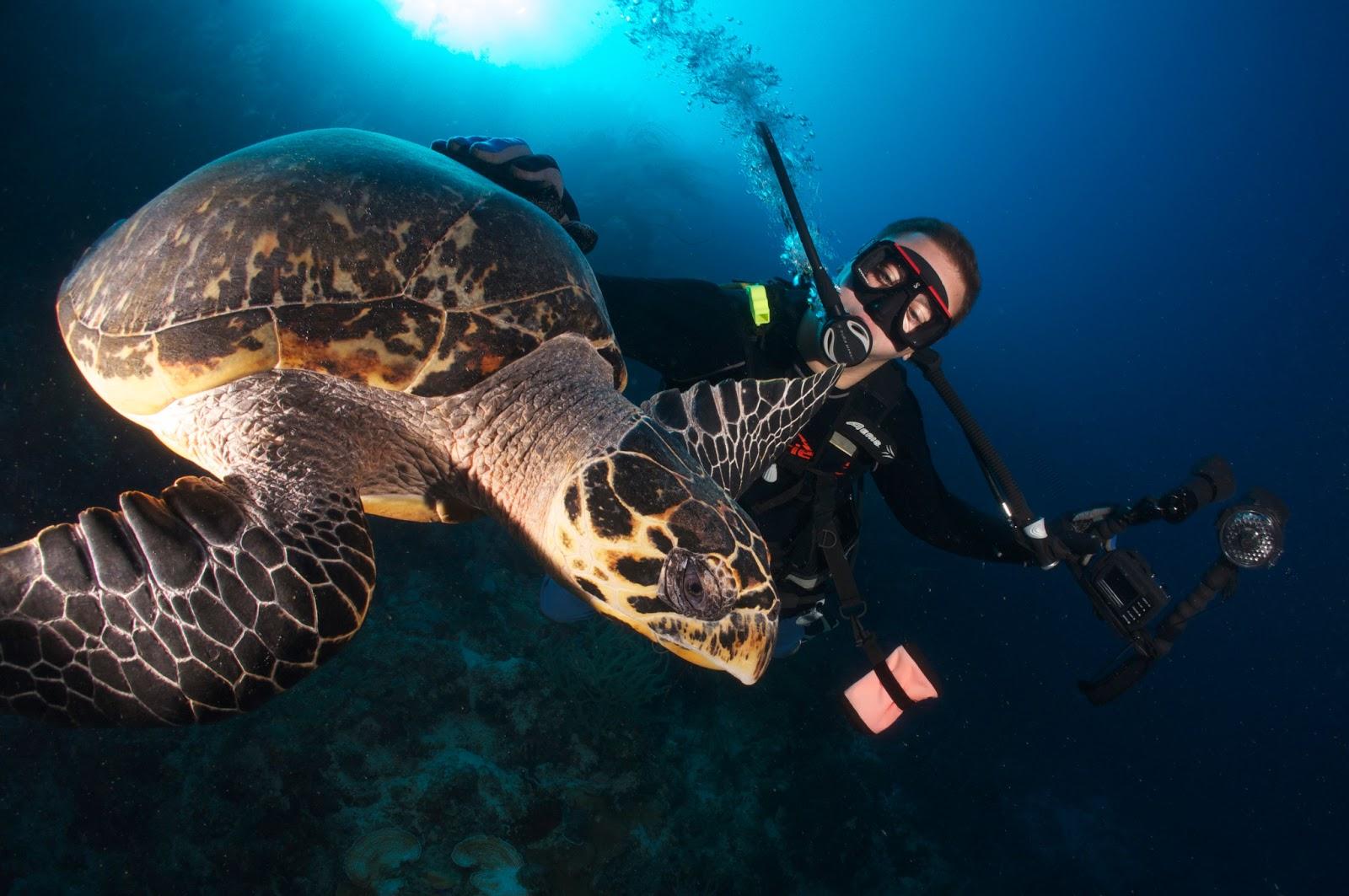 Scuba Diving Certification Fort Lauderdale