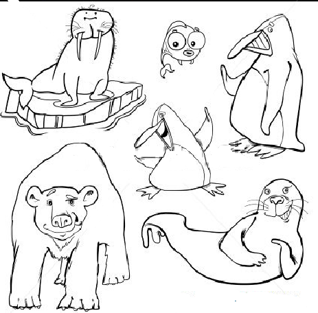Educatia Conteaza Animape Salbatice Polare