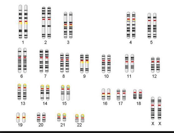 Genetic Engineering Info: The fascinating journey of