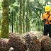 Penggunaan Teknologi di Perkebunan Kelapa Sawit Perusahaan Sukanto Tanoto