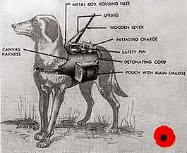 animaux dans la guerre, pets in war, dieren in oorlog,tiere, , canina,