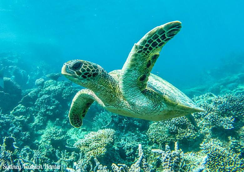 Sydney Fashion Hunter: Turtle Ningaloo Reef Western Australia