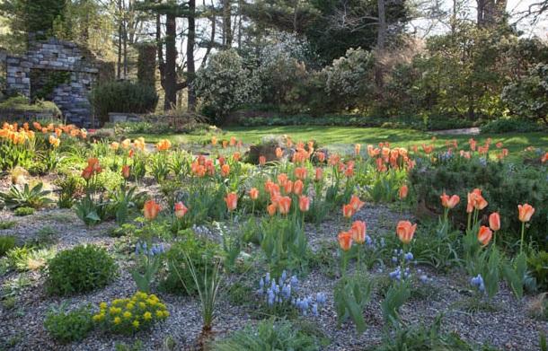 Первоцветы в саду