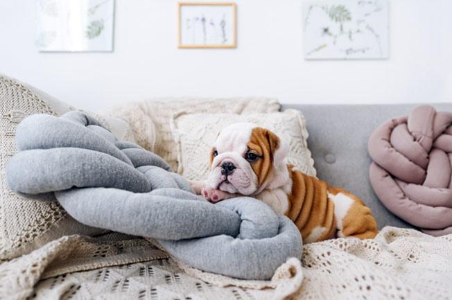Czy szczeniak powinien spać w łóżku?