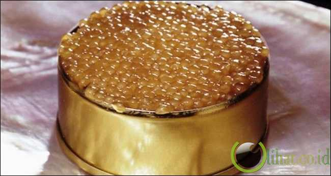Telur ikan Beluga atau Almas Kaviar