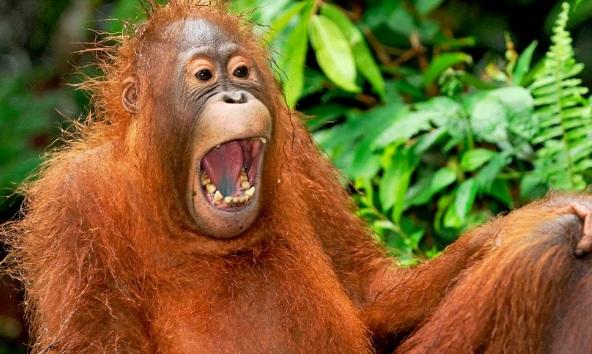 Apakah Hewan Memiliki Humor? Inilah Penjelasannya