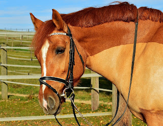 Chestnut Horse wearing a bridle.