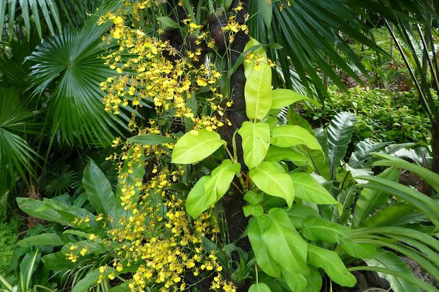 Drobniutkie orchidee