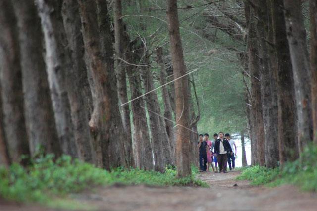 Hutan Pinus Pantai Kata