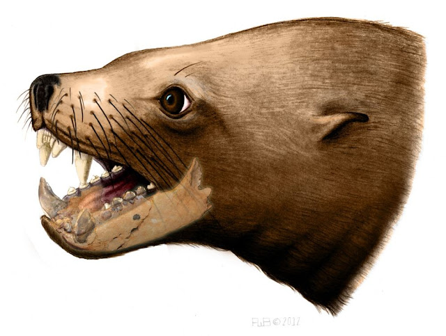 Further evidence found against ancient 'killer walrus' theory