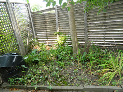 By Paul Jung Gardening Services--a Toronto Gardening Company Leslieville Garden Cleanup Before