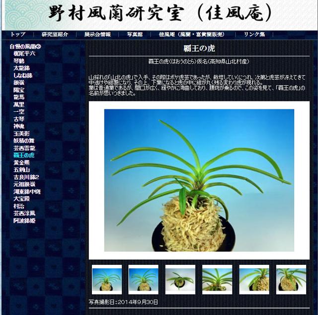 http://www.fuuran.jp/jiman_haounotora.html