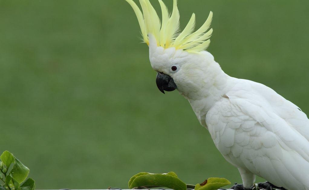 Most Intelligent Birds in the World