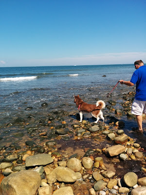 The dog friendly beach at the Montauk Lighthouse in Long Island NY