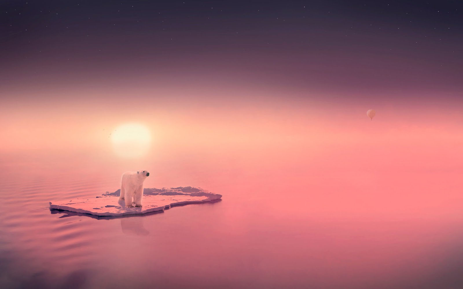 Wallpaper of a polar bear on ice | HD Animals Wallpapers