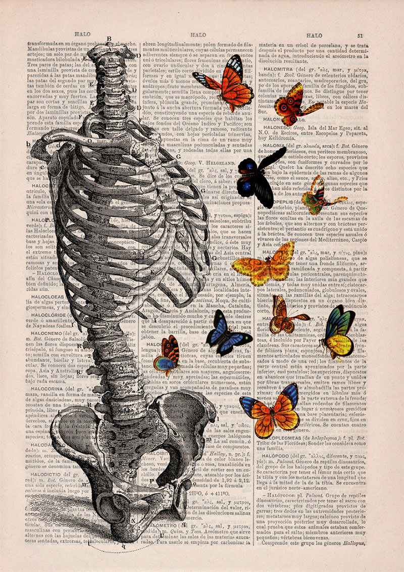 Floral Anatomical Illustrations On Old Dictionary Pages By Prrint Sakura Moth Hanger 160 Gr