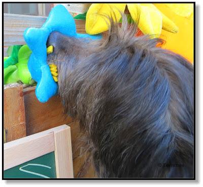 Hund sucht Leckerchen