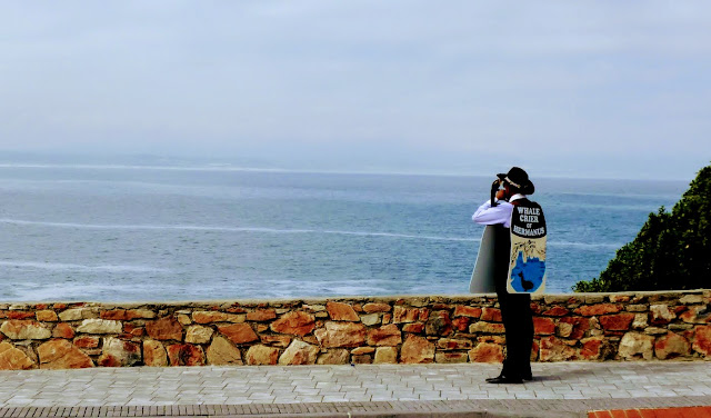 The Whale Crier of Hermanus, South Africa