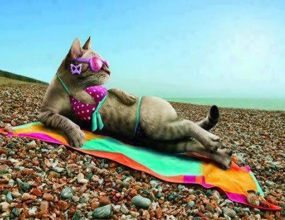 fuuny cat at beach