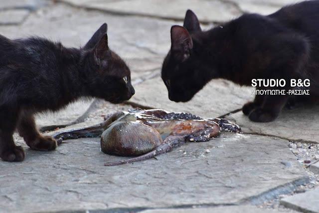 Η φωτογραφία της ημέρας: Το χταπόδι και οι...γάτες (βίντεο)