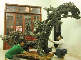 Top 10 tranh gỗ gốc cây