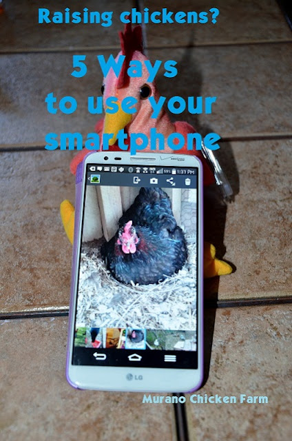backyard chickens,uses for a smartphone