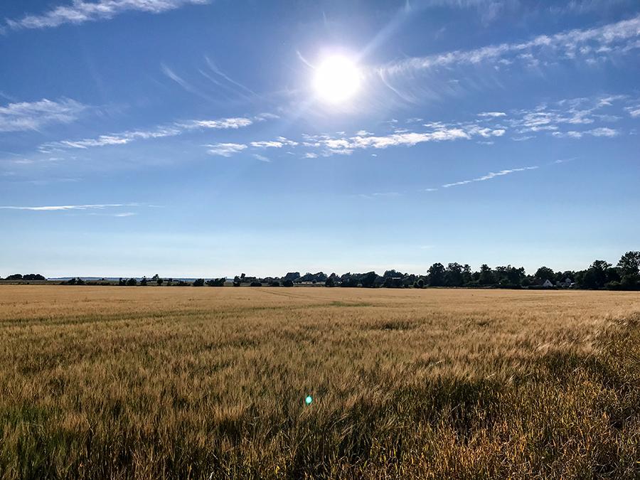Sädesfält i Kämpinge