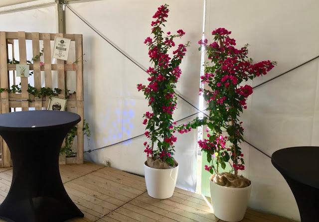 Plantenverhuur event feest beurs Brussel Mecheln Leuven omgeving