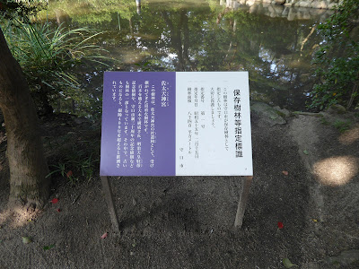佐太天神宮の保存樹林