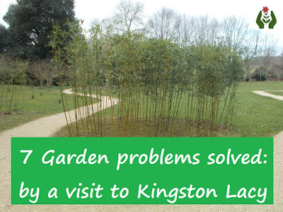 Garden problems solved Kingston Lacy Green Fingered Blog
