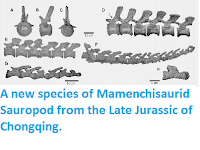 http://sciencythoughts.blogspot.co.uk/2015/03/a-new-species-of-mamenchisaurid.html