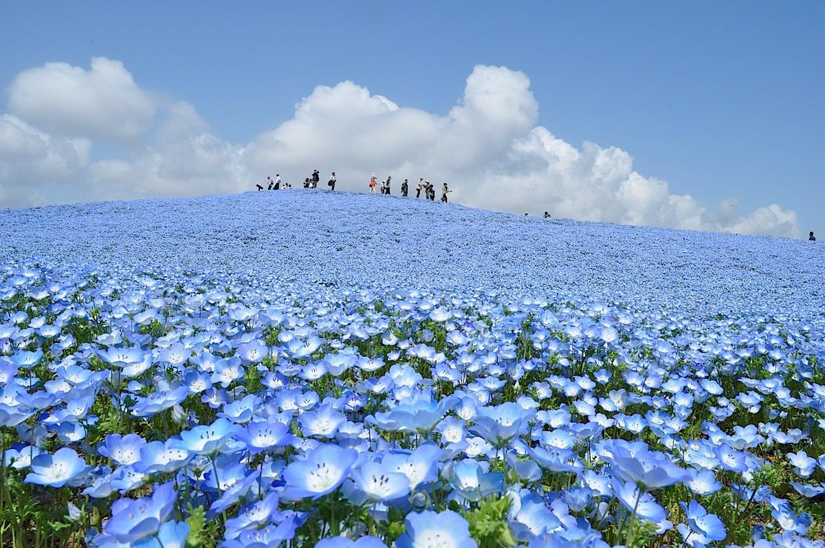 Lugar Mágico Increíble, Hitachi Seaside Park, Japón 3
