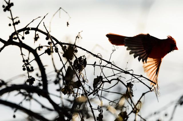 Forest 'islands' offer refuge to wintering birds