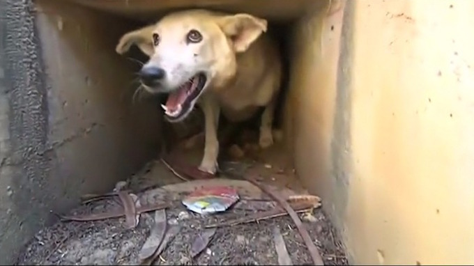 που χρονολογείται από έναν κτηνίατρο του πολέμου με μετατραυματικό στρες
